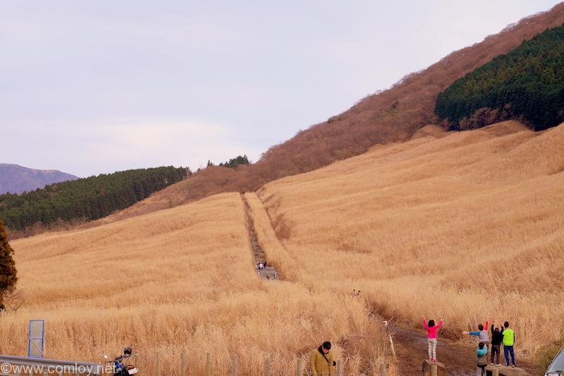箱根 仙石原 すすきの草原